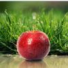 чудо яблоко
